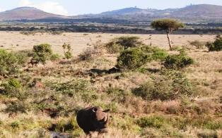 Safari to Unblemished Wilderness of Laikipia in Kenya