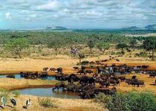 Full Day Safari to Tsavo East National Park