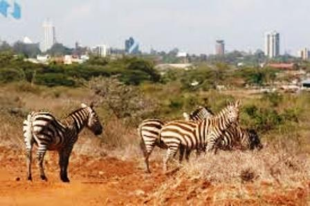 a variety of animals and birds close to a capital city.