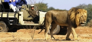 wildlife viewing in kenya