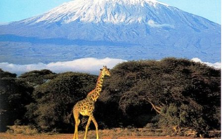 The Girraffe of Amboseli National Park