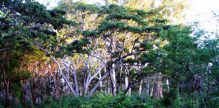 Arabuko Sokoke Forest National Park in Kenya