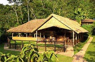 Gorilla Forest Camp in Gorillas Bwindi Impenetrable Forest National Park