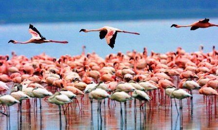 safaris and sightseeing on lake nakuru hotel accommodation of kenya