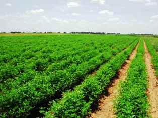 Investment Potentials in Kenya Agriculture Sector