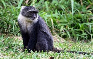 animal species including the endangered De-Brazza's monkey