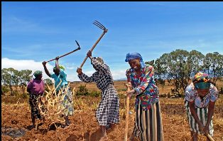Economic activities of the Embu People
