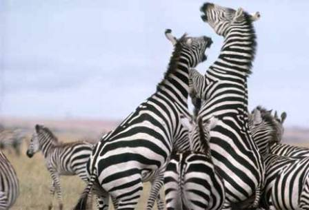 nairobi city safari to nairobi national park