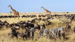 Masai Mara National Reserve perfect