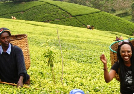 The Kisii are regarded as one of the most economically active communities in Kenya, blessed with rolling tea estates