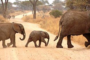 Kenya Attractions