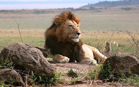 kenya climate the best for wildlife viewing throughout the year