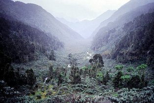 mountains of the moon rwenzoris
